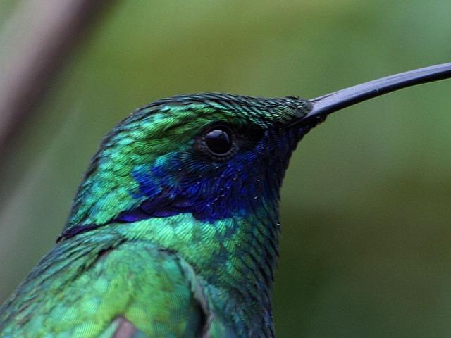 hummingbird-3171_640